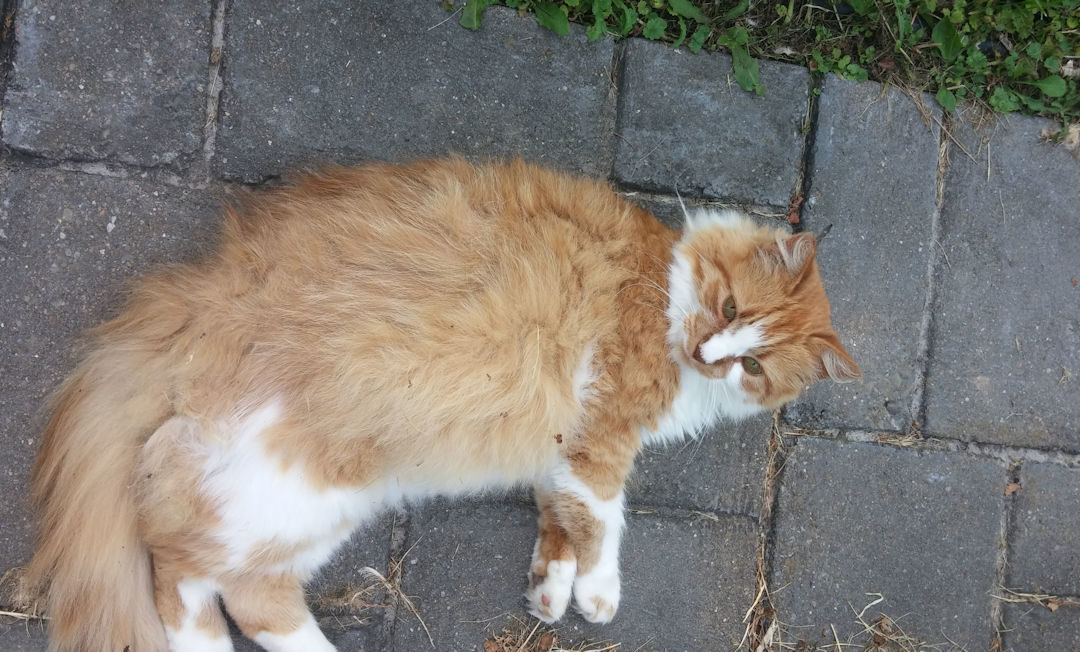 Lessons From a Feral Cat…